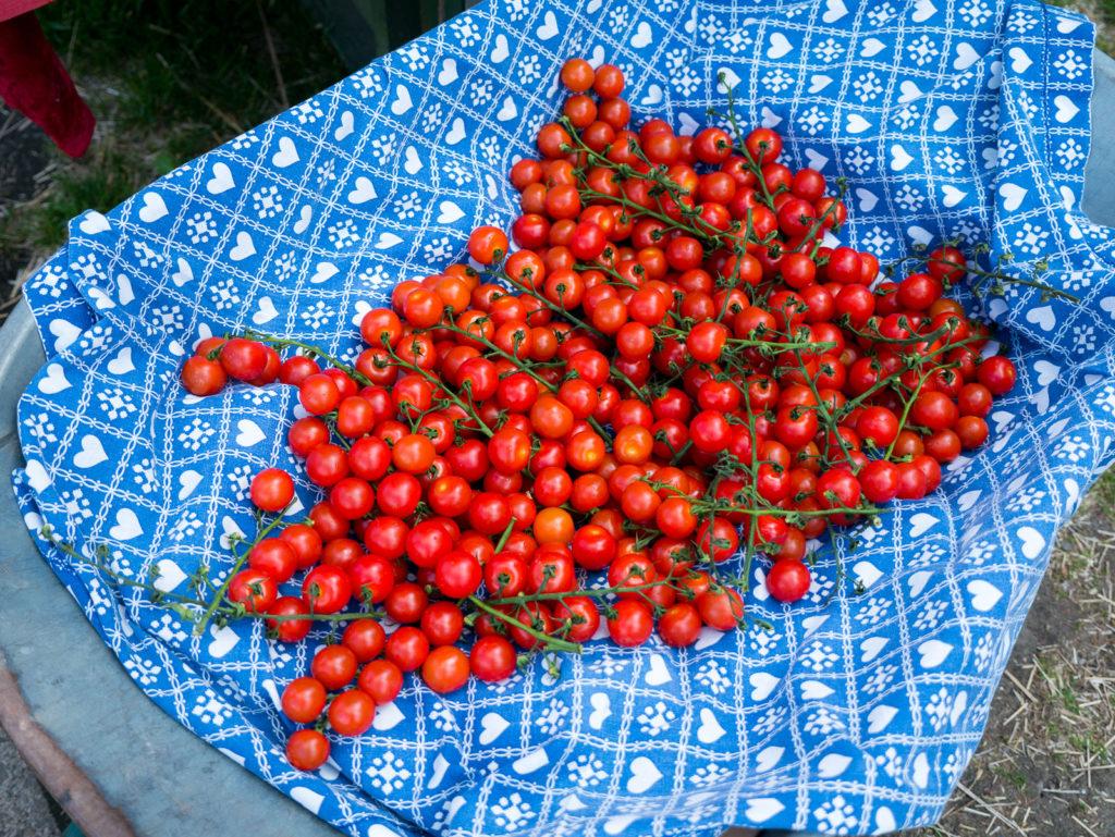 tomatenklang Tomaten